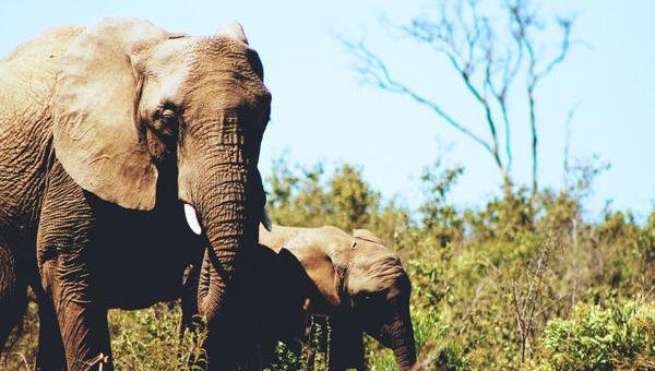 Elefante grande pequeño