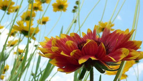Flor, naturaleza, ISR, ESG, rojo, amarillo