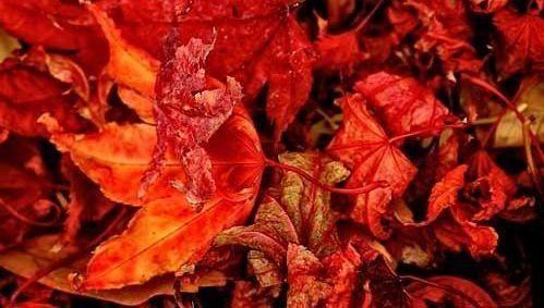 hojas, caer, bajar, otoño