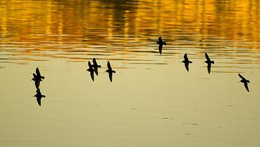 pájaros, calma, tranquilidad