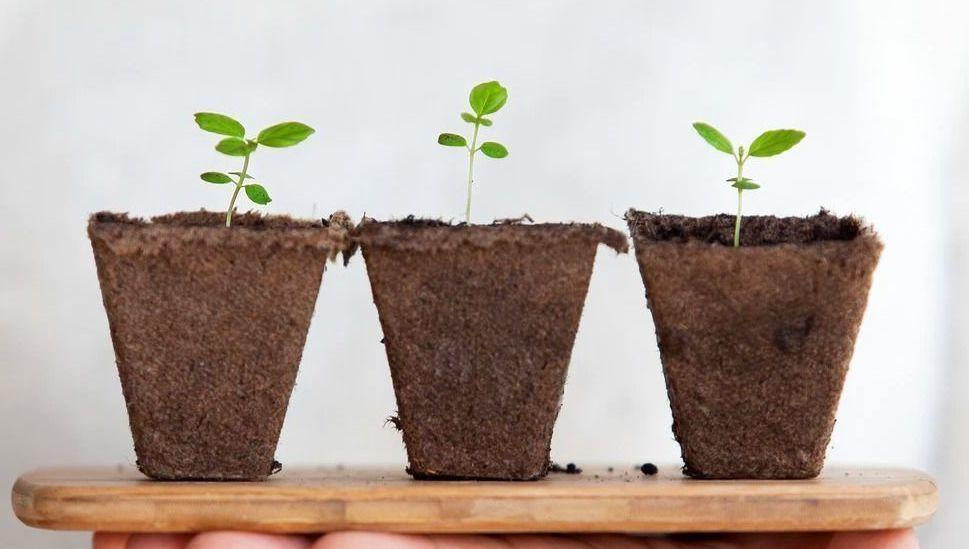 crecimiento-multiboutique-alianza