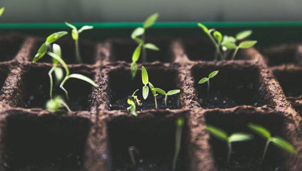Plantas Nacimiento Nace