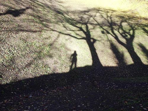 Sombra, réplica, ISR, sostenible
