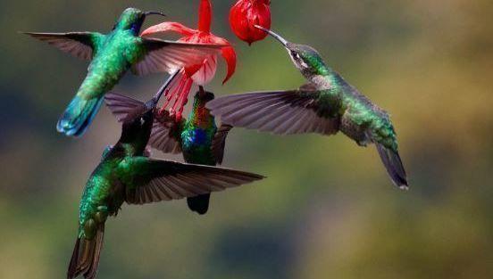 pájaro, colibrí, flor, ISR, ESG, lanzamientos, stock picking