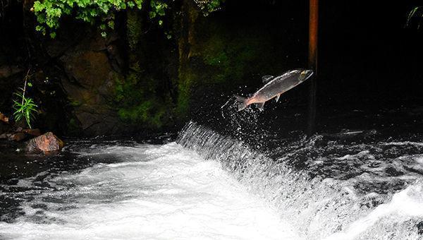 contrarian, salmón, inversión, ESG