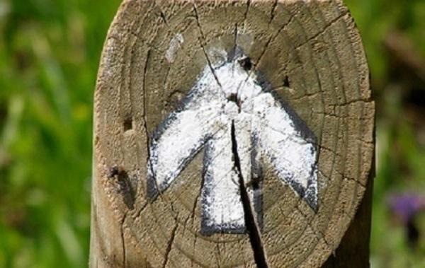 madera_flecha