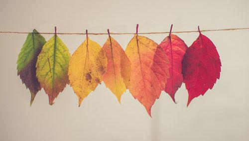 Caida hojas