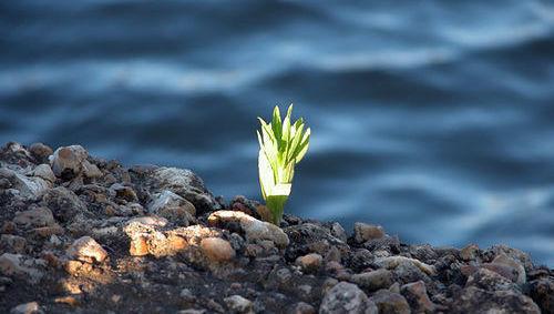 ISR, ESG, medioambiente, crecimiento, naturaleza