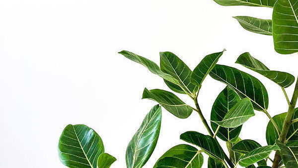 esg-asg-isr-green-verde-sostenibilidad