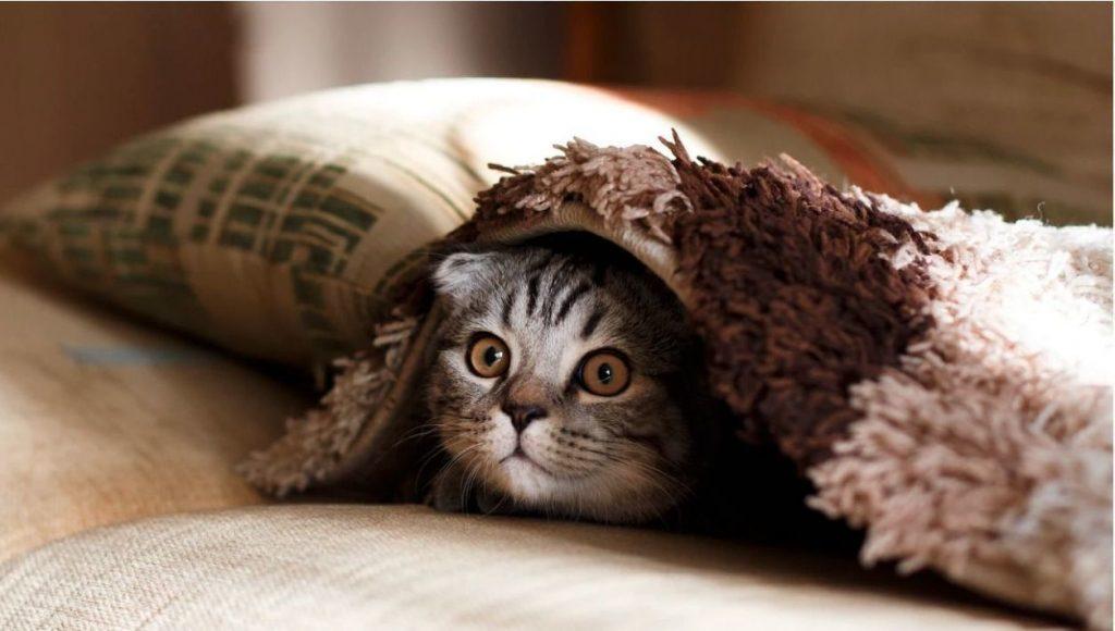 gato-miedo-susto-rebote