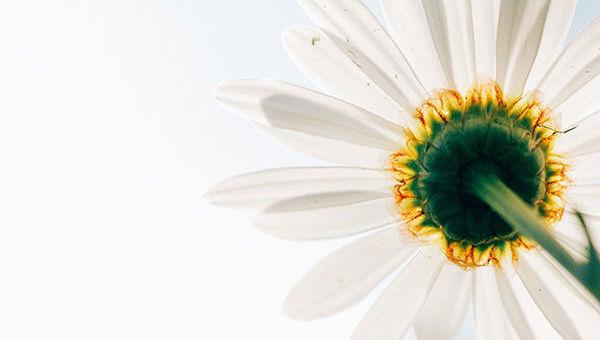 ISR, ASG, ESG, Naturaleza, optimismo, luz, flor