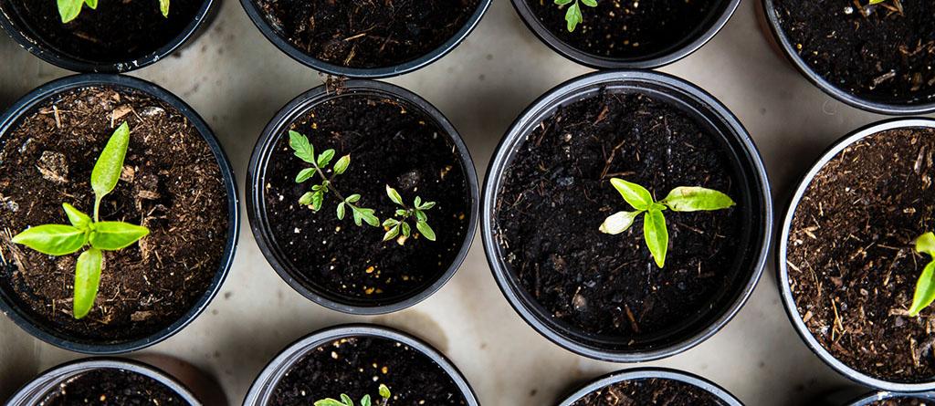 growth-crecimiento-esg-asg-verde-beneficio