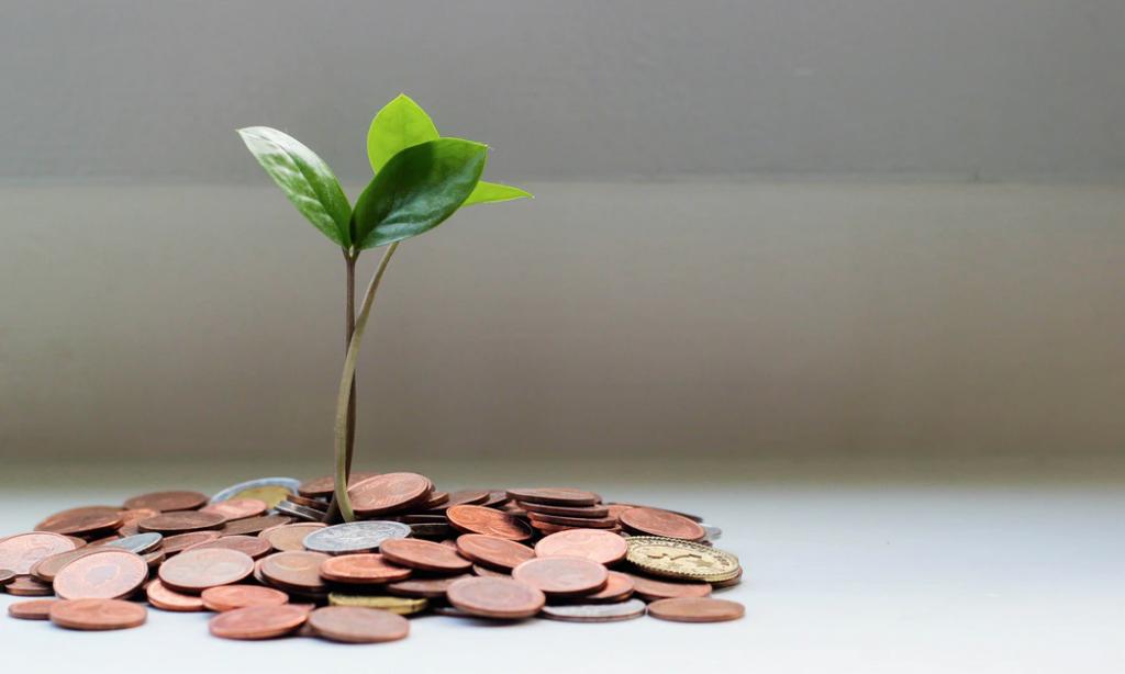 Monedas planta