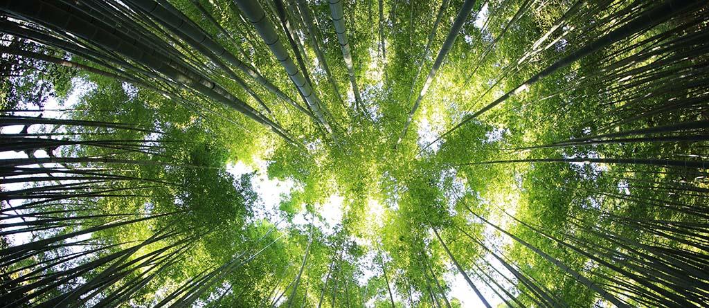Bosque, verde, ESG