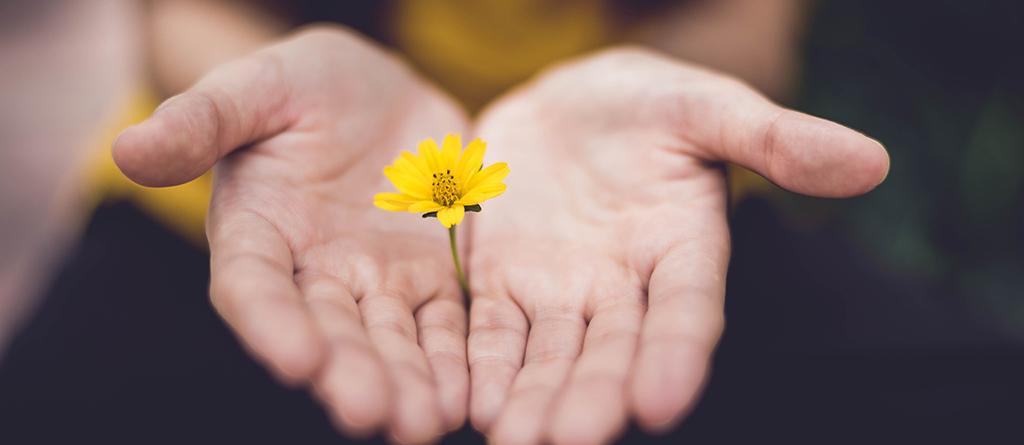 value, flor, valor, crecer