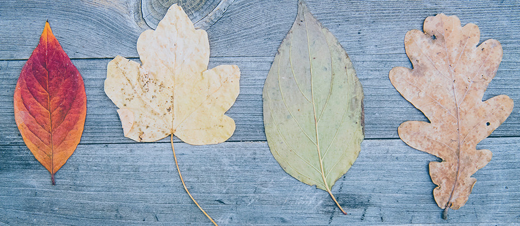 cambio, hojas, flexible