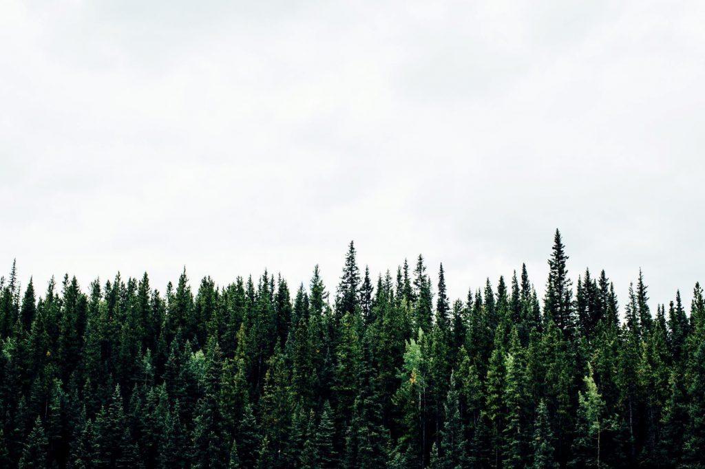 verde_floresta_ambiente