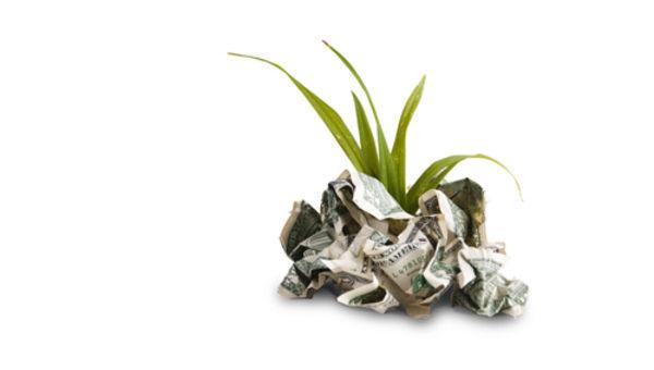 planta; dinheiro; verde