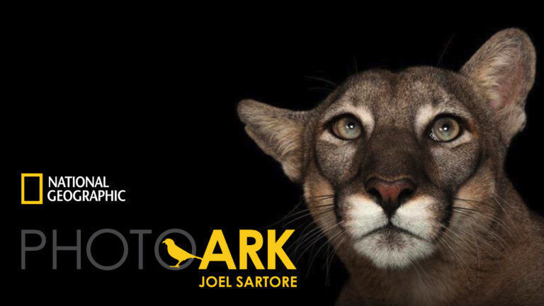PhotoArk_Joel-Sartore_Cat-768x432
