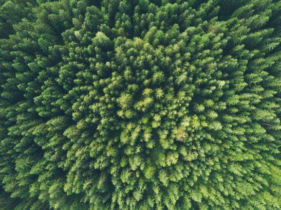 verde_green_ISR