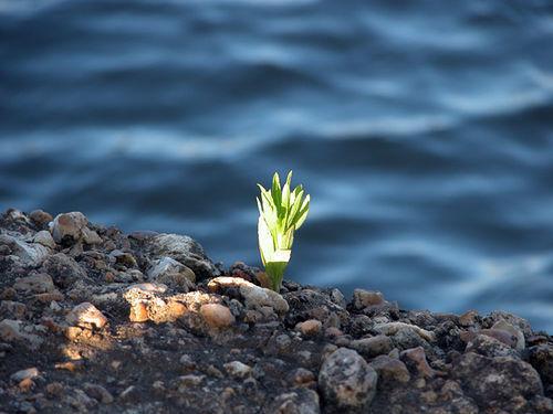 planta, verde, esg, ambiental