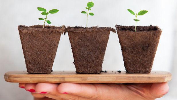 verde, sustentável, crescimento, planta
