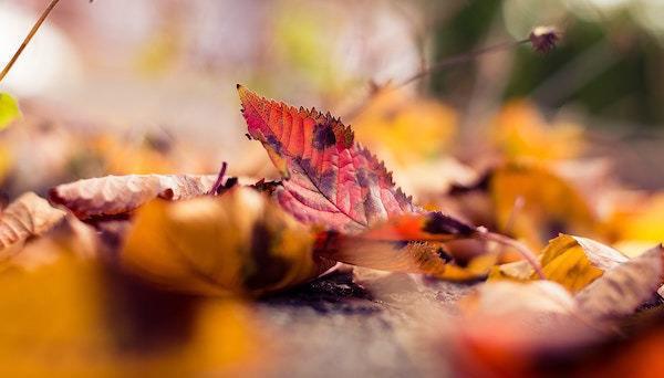 fall_folhas_colors_outono_queda