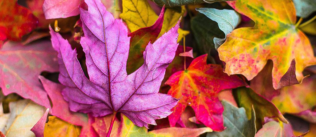 folhas panorama cores