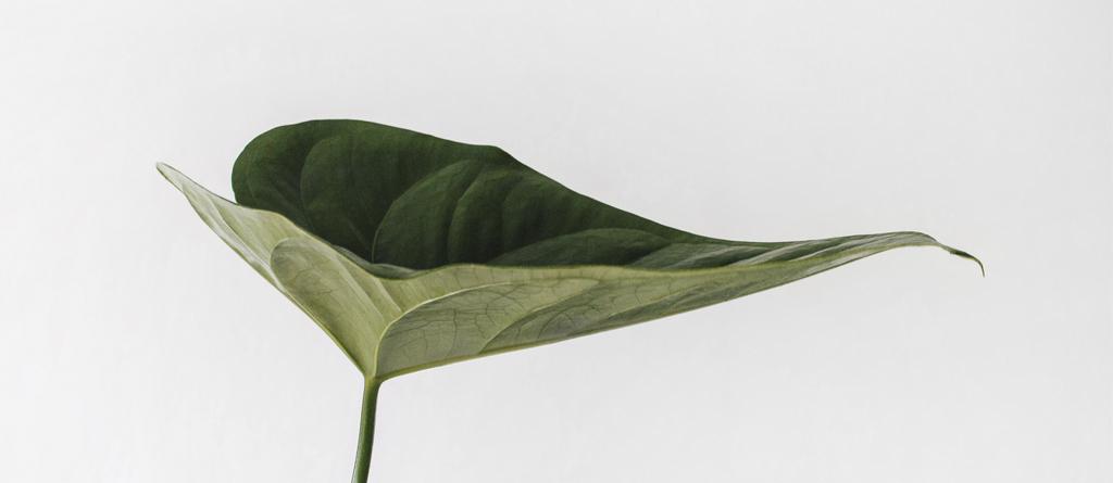 sustentabilidade folha