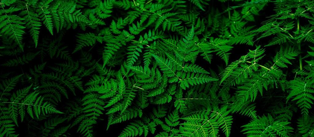 Verde green sustentavel esg