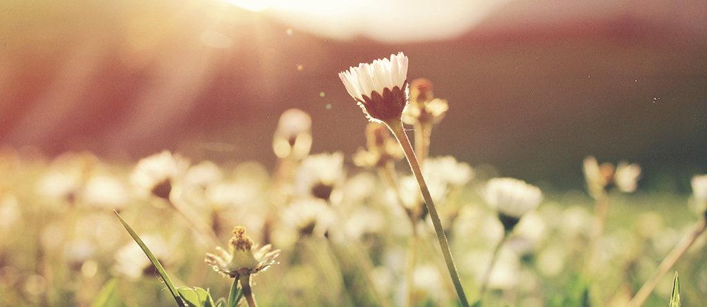 primavera flor ESG