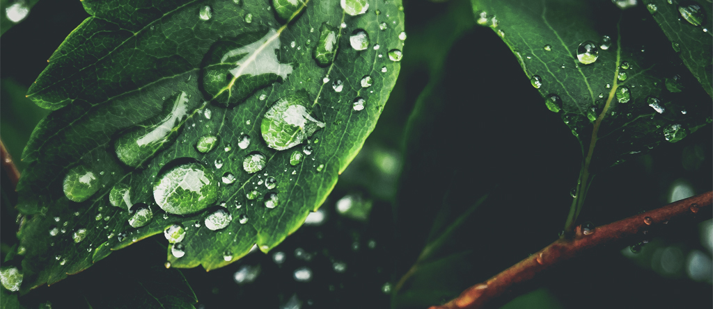 sustentabilidade verde green esg