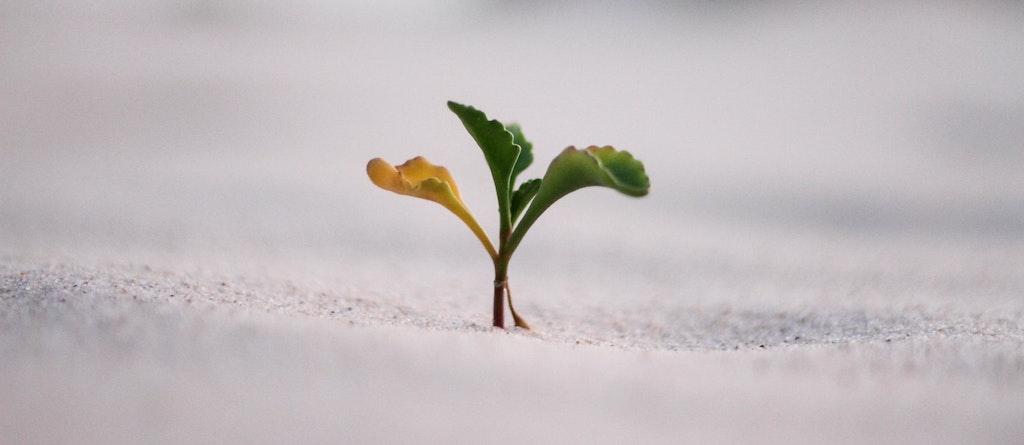 Fundos de investimento Crescer nascer sustentavel esg isr verde growth