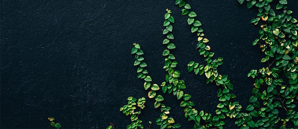 verde ESG noticia