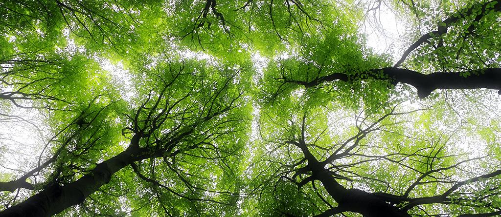 sustentabilidade ESG noticia
