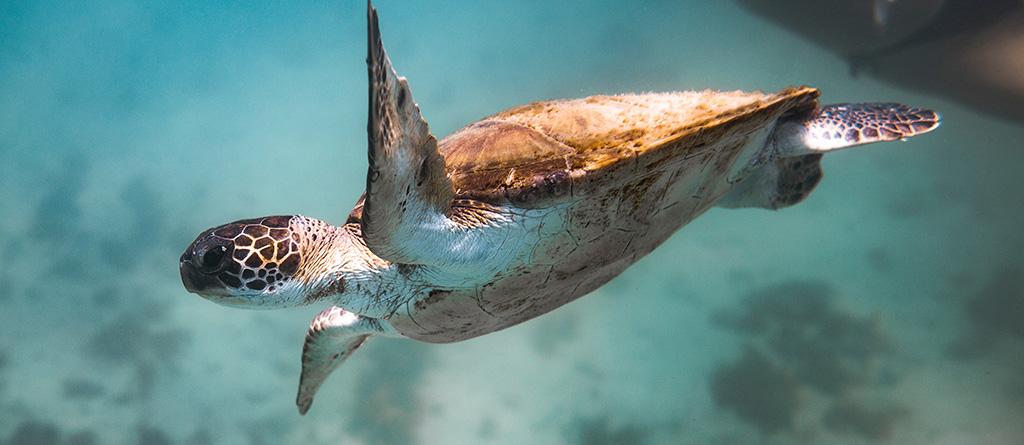 tartaruga mar sustentabilidade