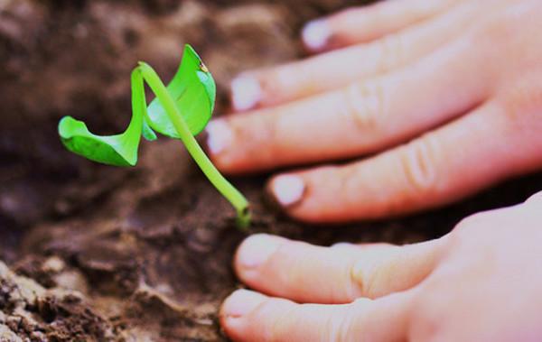 Growth_Planta_