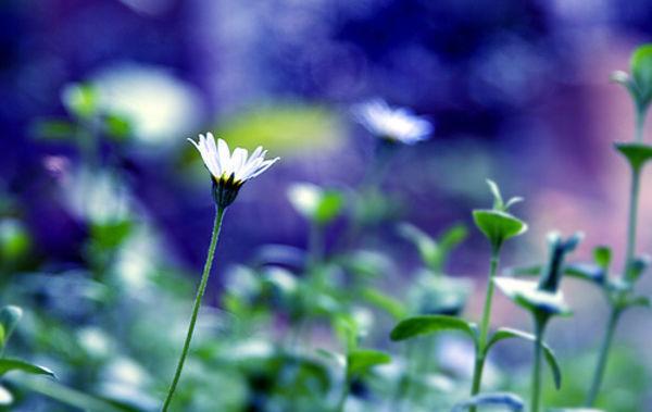 00flower