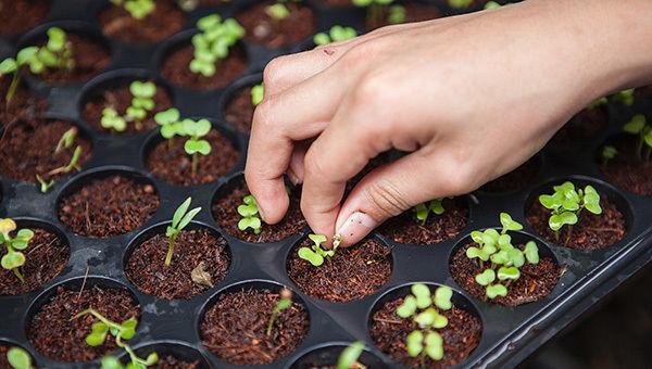 sostenibilita__esg