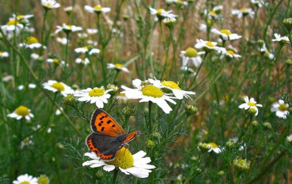 Flores_visitante